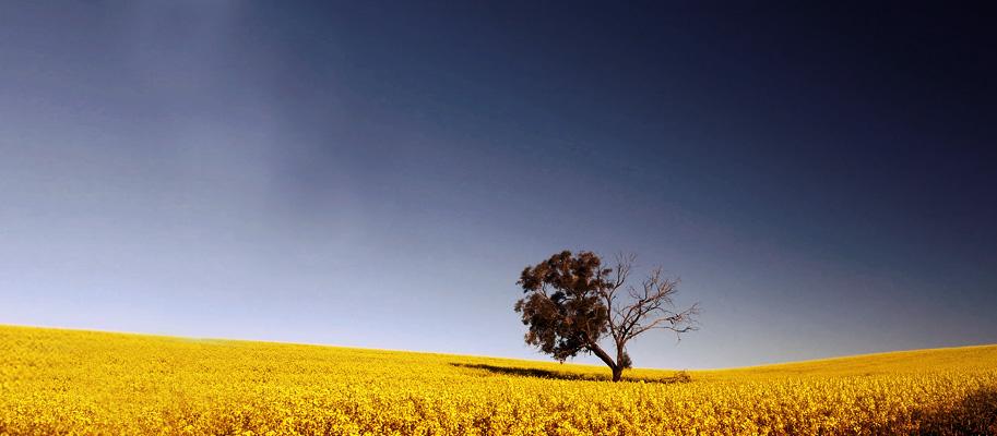 field_tree